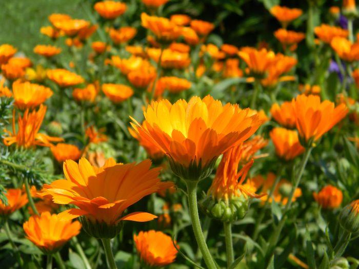 Не только достойное украшение сада. \ Фото: rostok.info.