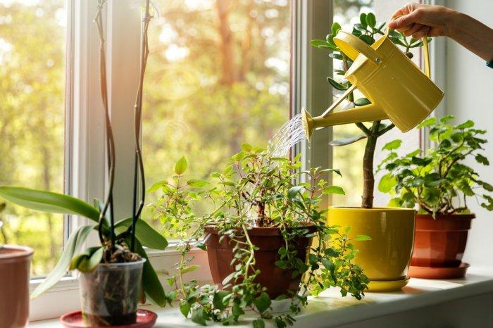 Не забываем и про комнатные растения. \ Фото: botanichka.ru.