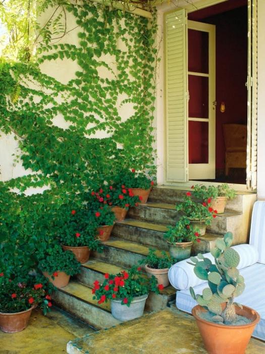 Оригинальное сочетание вьющихся растений с цветами в горшках. \ Фото: google.ru.