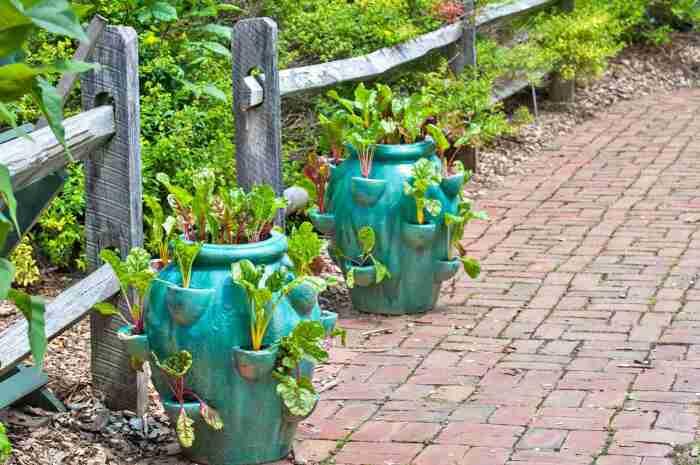 Вазоны для овощей и зелени. \ Фото: te.howtouser.com.