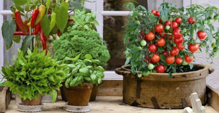 Овощи в горшках. \ Фото: pinterest.ru.