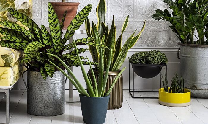 Растения в интерьере. \ Фото: dekoriko.ru.