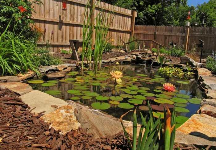 Пруд в саду — отличное место, где можно хорошо провести время.