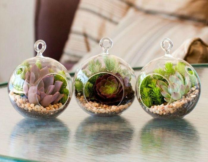 Стеклянные горшки круглой формы – прекрасный вариант для суккулентов и кактусов.
