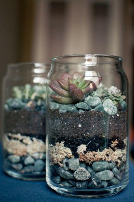 Горшками для суккулентов и кактусов могут послужить даже самые обычные стеклянные банки.