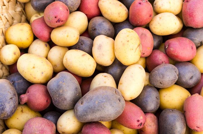 Цветной картофель. \ Фото: ogorodnik.com.