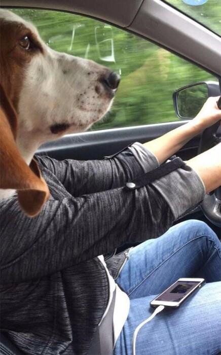 А вы своей собаке доверяете вести машину? \ Фото: ntv.com.tr.