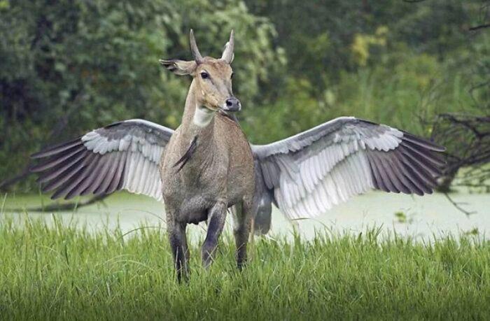 Когда вышел в лес погулять, а там такое. Так что крылатыми бывают не только кони и качели. \ Фото: yandex.ua.