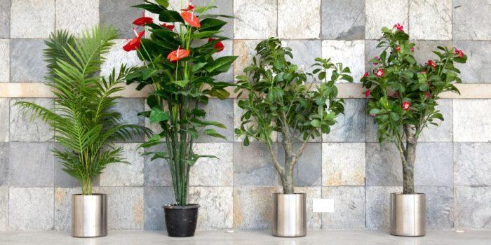 Разбавляем интерьер комнатными растениями. \ Фото: vibrat-detiam.com.ua.