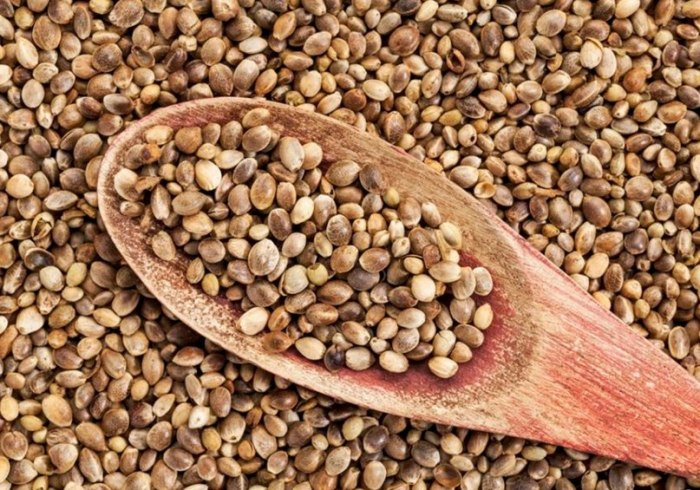 Конопляные семена. \ Фото: google.com.ua.