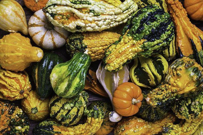 Декоративные тыквы. \ Фото: thespruce.com.