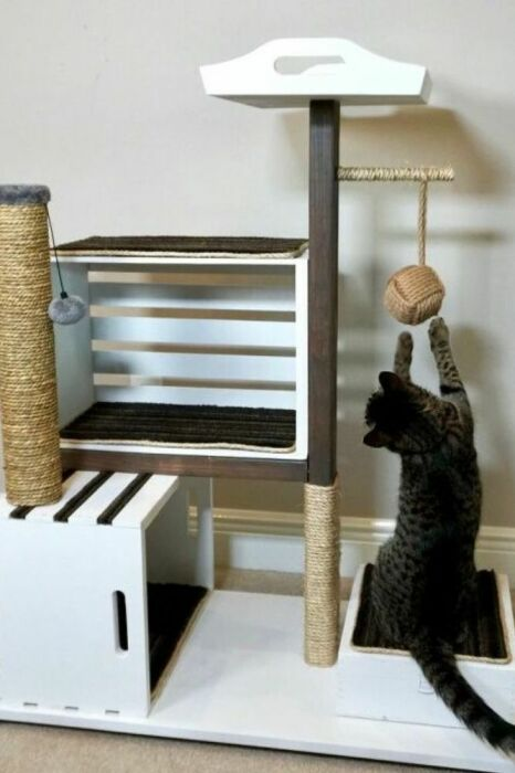 Кошачий аттракцион. \ Фото: pinterest.com.