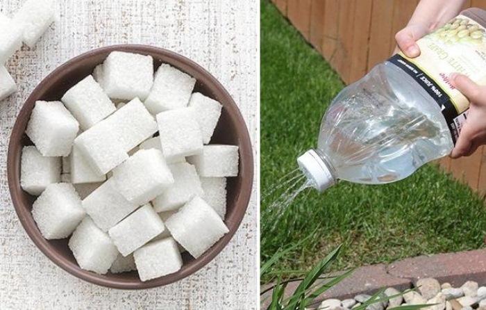 Сахарный сироп поможет решить наболевшую проблему.
