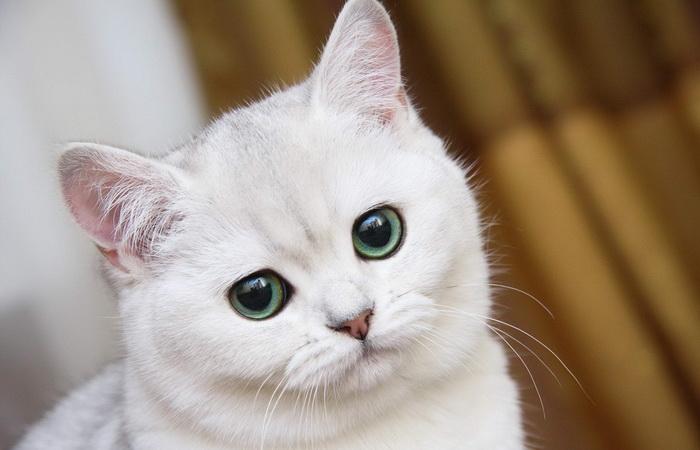 В Новой Зеландии планируют запретить держать дома котов.