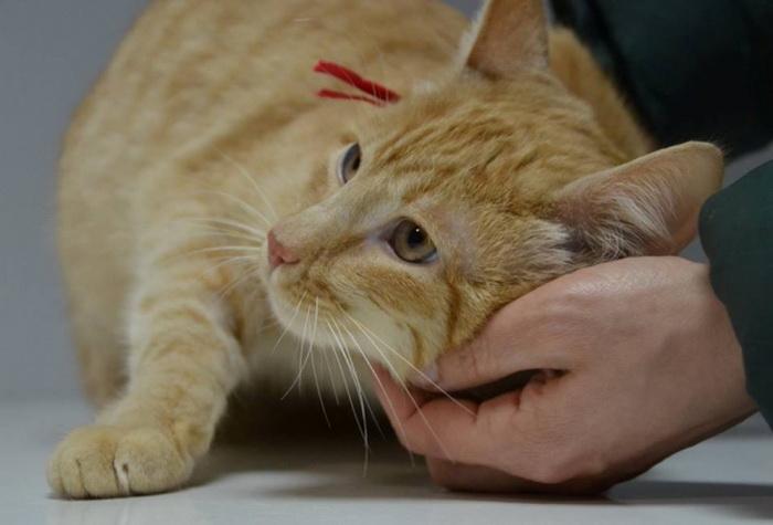 Котам, которые сейчас живут в семьях, ничего не угрожает.