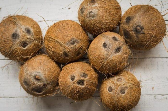 Кокосы - одни из самых прочных фруктов.