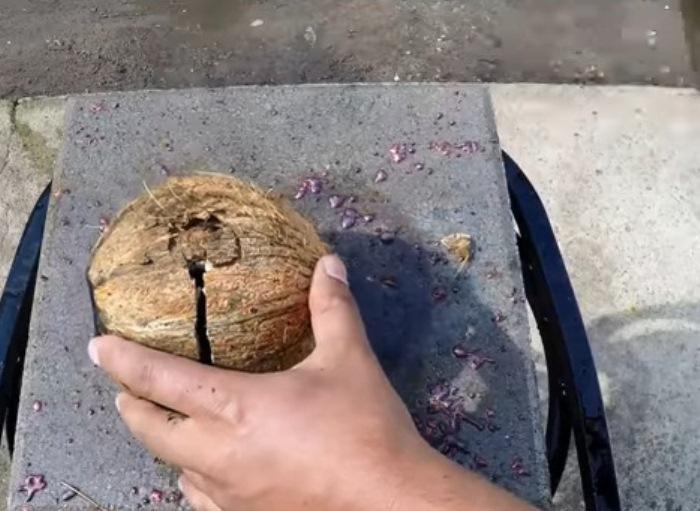 Кокос разбивают молотком, чтобы достать из него металлический шар.