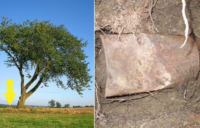 Пара случайно нашла старые жестяные банки, закопанные возле дерева, и это происшествие кардинально изменило ее жизнь.