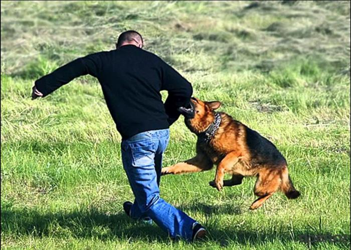 Что делать, если собака проявляет агрессию.