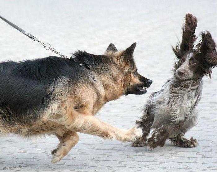Чего нельзя делать при нападении собаки.
