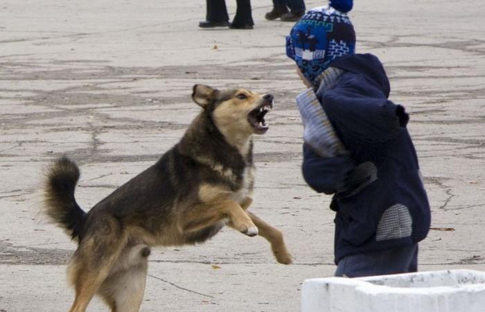 Что делать в случае нападения собаки.