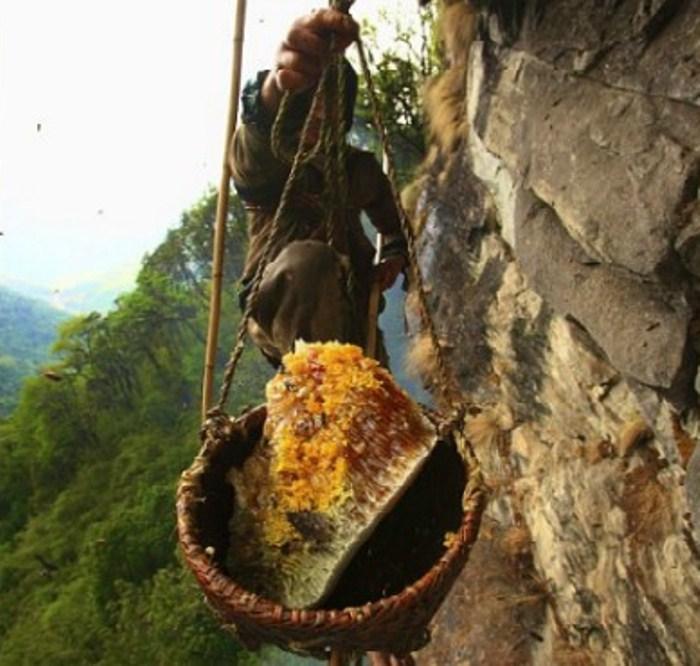 Собиратели меда в Гималаях.