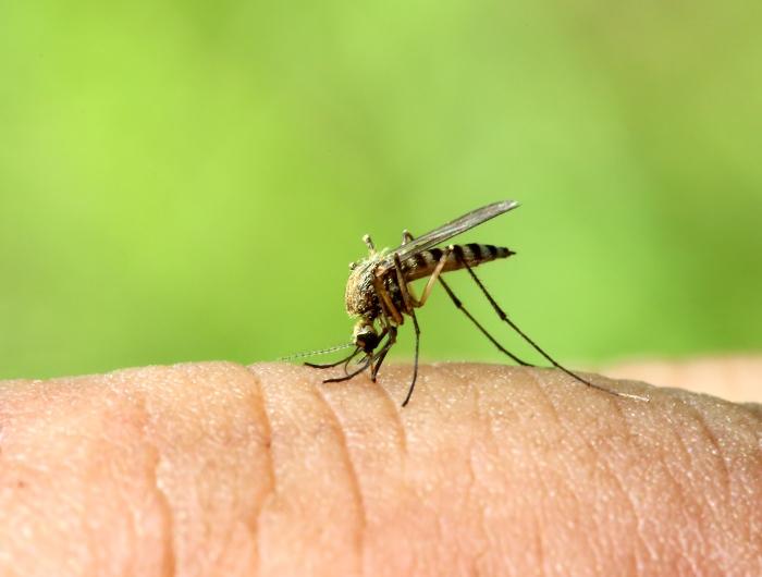 Как избавиться от зуда и боли после укуса комара.