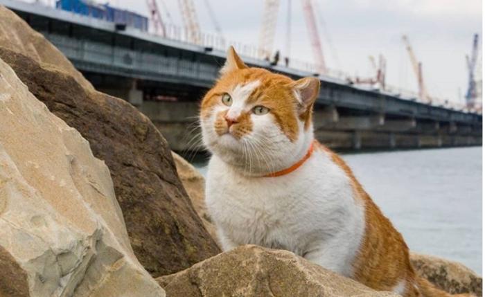 Кот Мостик стал талисманом Крымского моста.