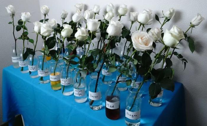 Масштабный эксперимент с розами.