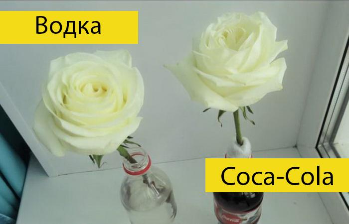 Как продлить жизнь розам без специальных средств.