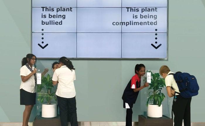 Эксперимент с двумя одинаковыми цветками. Одно растение окружили лаской, а второе постоянно оскорбляли.