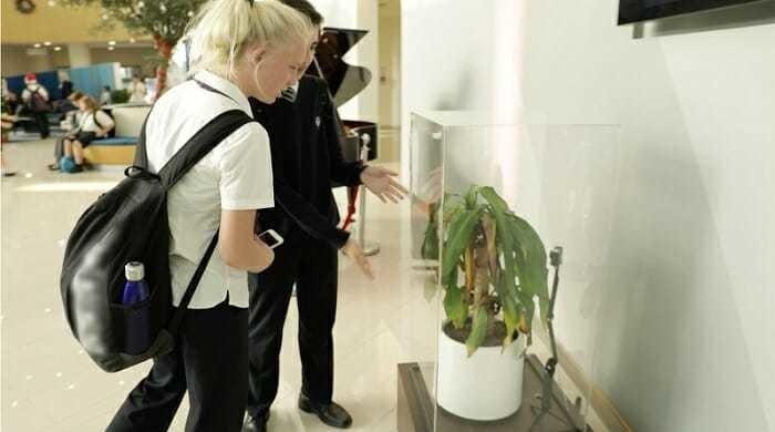 Эксперимент растениями удивил школьников.