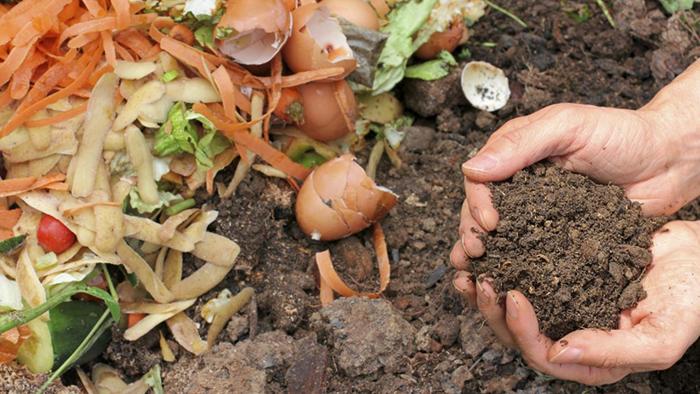 Скорлупу полезно добавлять в компост.
