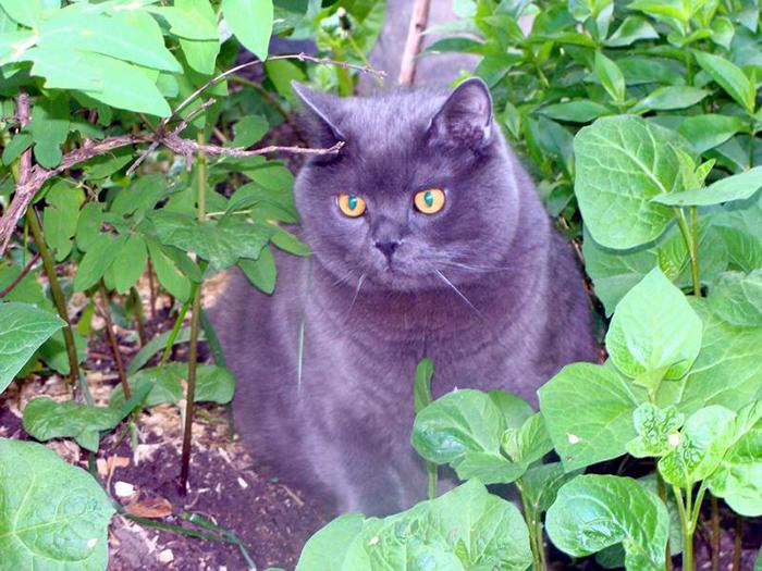 Соседский кот больше не будет приходить в ваш огород.