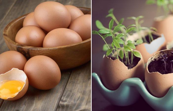 Чем полезна яичная скорлупа