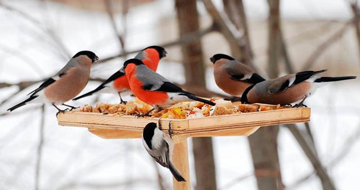 Скорлупа - полезная подкормка для птиц.