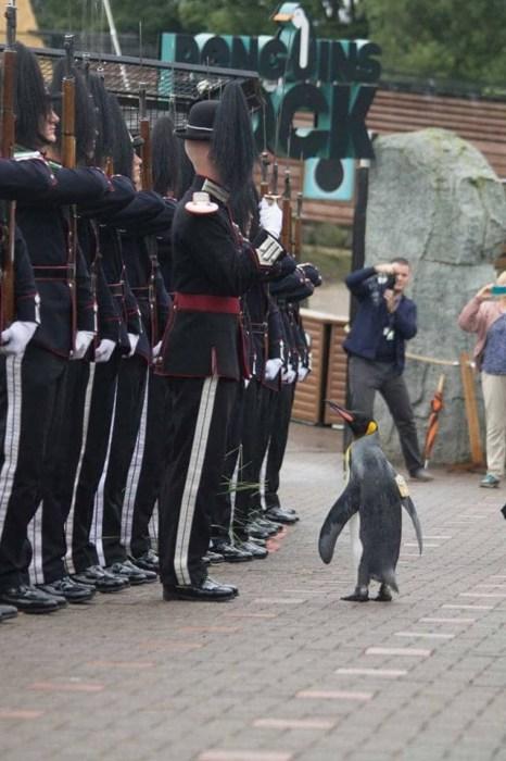 Олаф инспектирует гвардейский строй. / Фото: pbs.twimg.com