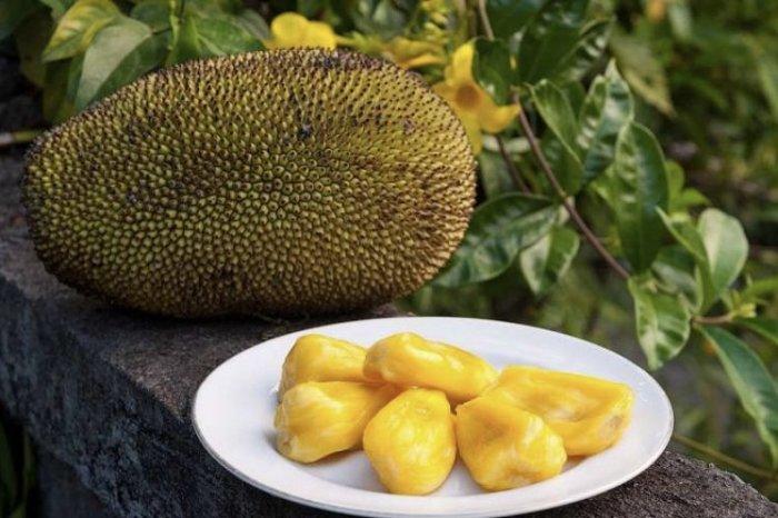 Удивительный фрукт, который может заменить мясо. /Фото: agronomu.com