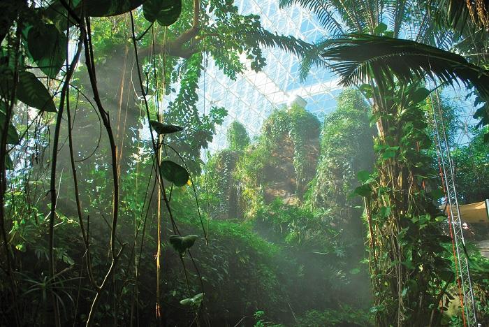 Тропический лес в «Биосфере-2». /Фото: dartmouthalumnimagazine.com