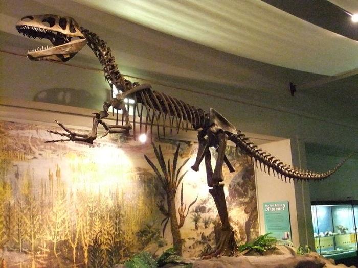 Джорджу Вашингтону не довелось увидеть своими глазами первого ископаемого динозавра. /Фото: upload.wikimedia.org