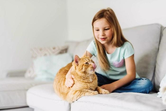 Метки кошек особенно въедливые, но и с ними можно справиться. /Фото: 750003.smushcdn.com
