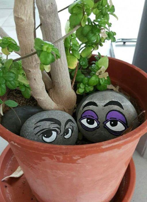 «Ожившие камни» могут с успехом украсить дачный участок, клумбы или горшки с цветами. /Фото: i.pinimg.com