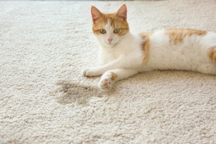 Запах кошачьей мочи  не красит дом. /Фото: yandex.ru