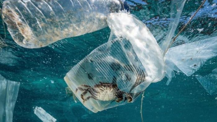 Пластик вредит многим птицам и животным. /Фото: grantist.com