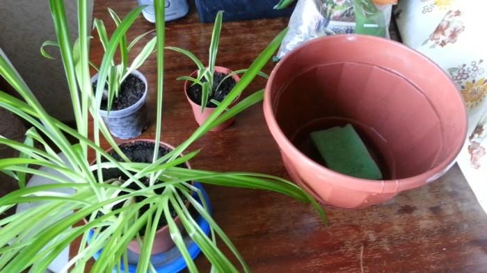 Полезный лайфхак для более заботливого ухода за растениями. /Фото: i.ytimg.com