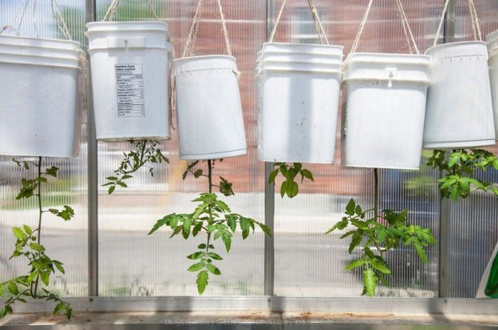 На самом деле выращивать помидоры дома очень просто. /Фото: i.pinimg.com