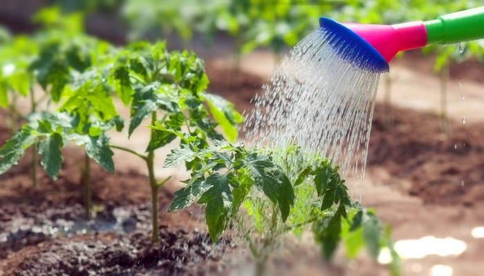 Несколько полезных советов способны полностью поменять представление о выращивании овощей. /Фото: sornyakov.net