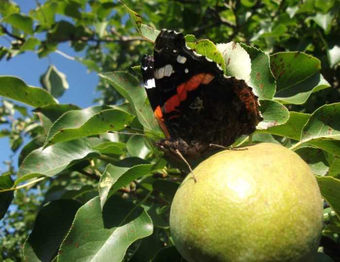 Красота спасет мир, а в придачу и урожай на огороде. /Фото: i.imgur.com