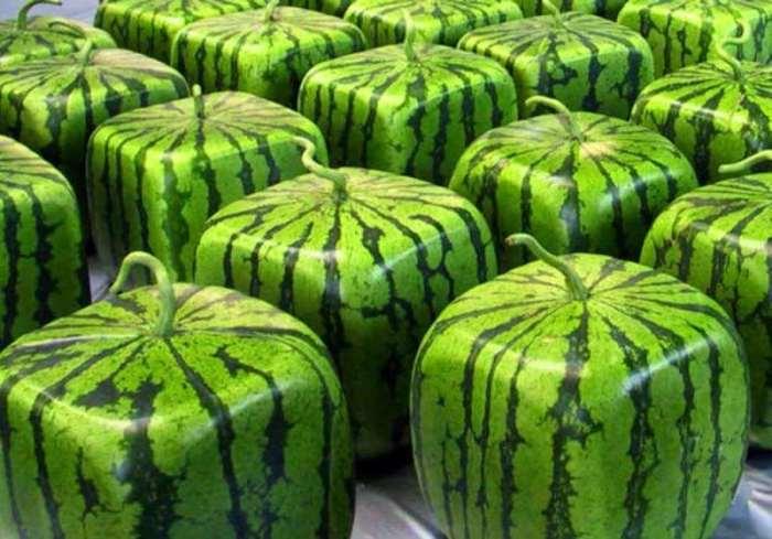 Даже привычный на вкус плод необычной формы становится более интересным. /Фото: moscow-airports.com