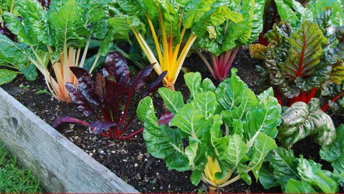 Чтобы выращивать растения правильно, лучше заранее узнать все о свете и тени. /Фото: sslawsociety.org